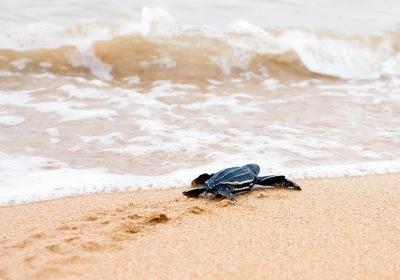 5 Fun Facts About Sea Turtle Season in the Sunshine State